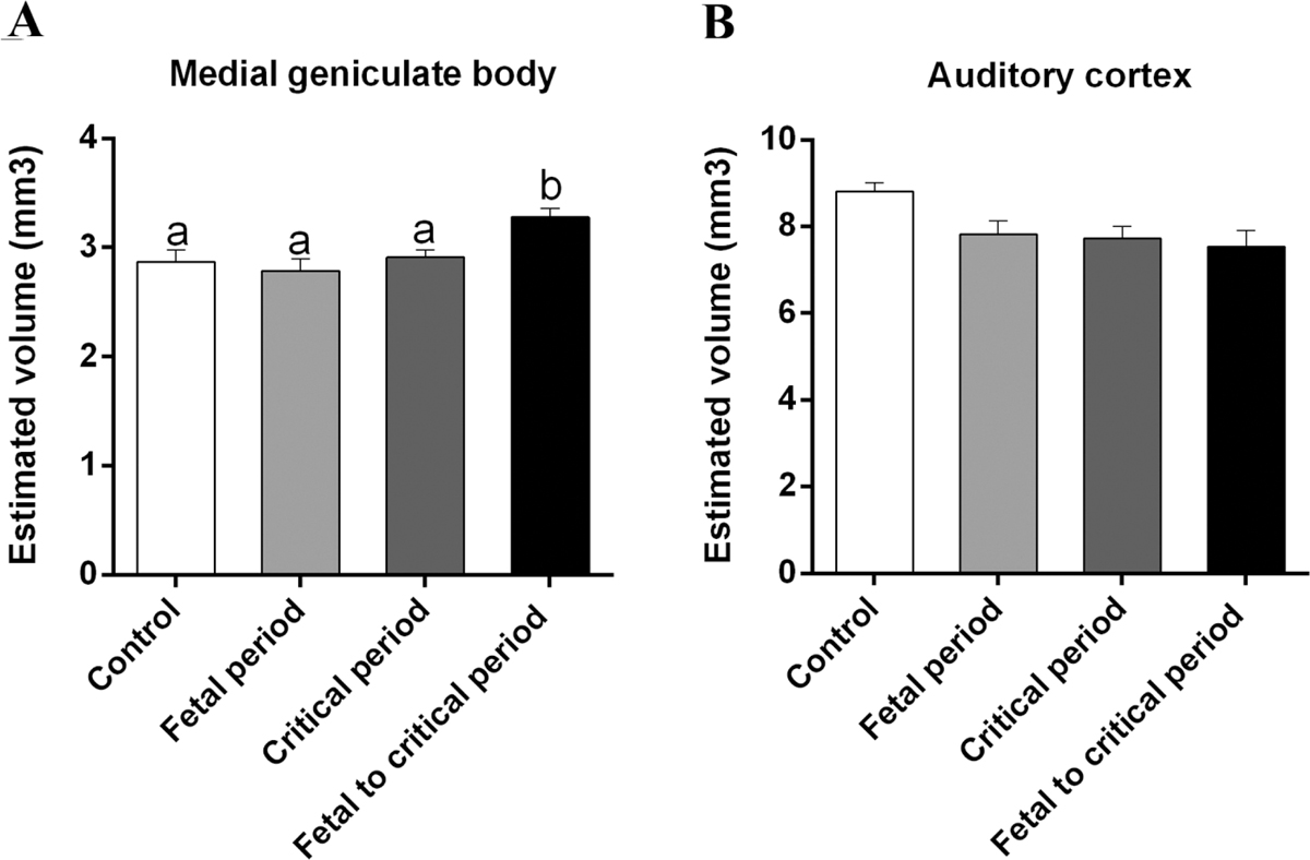 Figure 3: Mean ± SEM of estimated volume of medial geniculate body (a) and auditory cortex (b). Different superscript letters indicate significant differences among groups (<i>P</i> < 0.05)